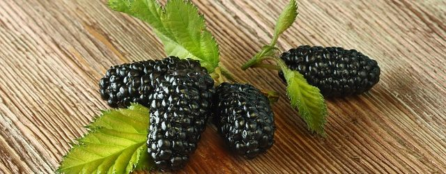 you can grow mulberries indoors