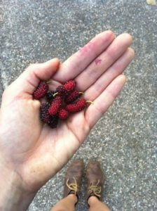 i grew mulberries in my apartment