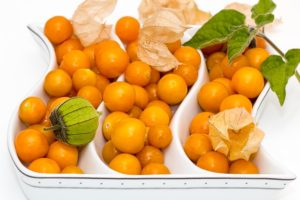 grow a cape gooseberry plant indoors