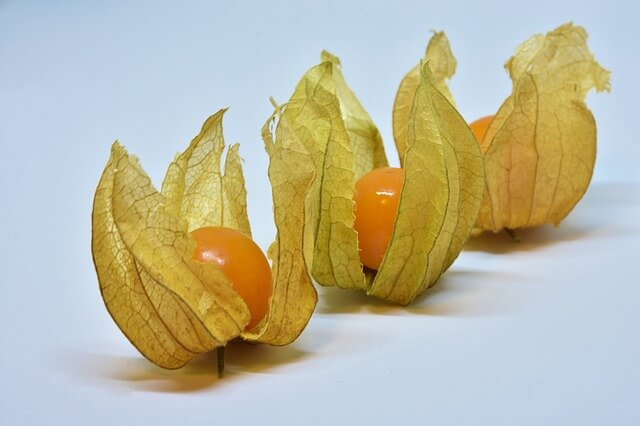 cape gooseberry i grew in my apartment