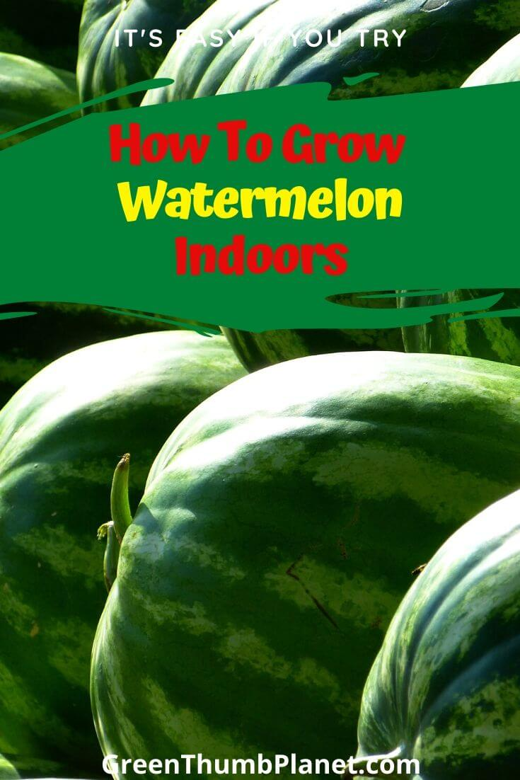 How To Grow Watermelon Indoors