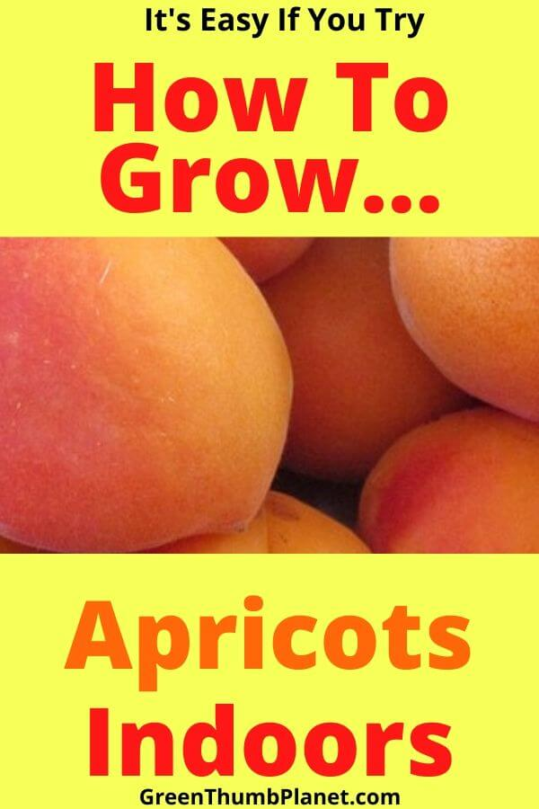 How To Grow Apricots Indoors