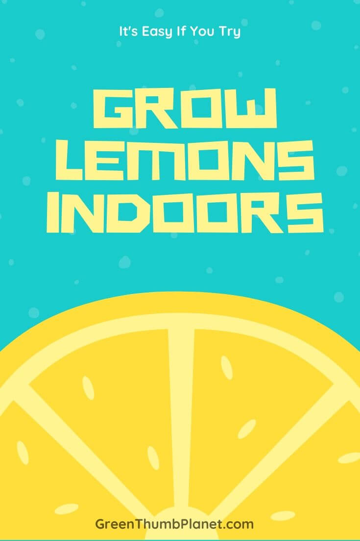 How To Easily Grow Lemon Trees Indoors