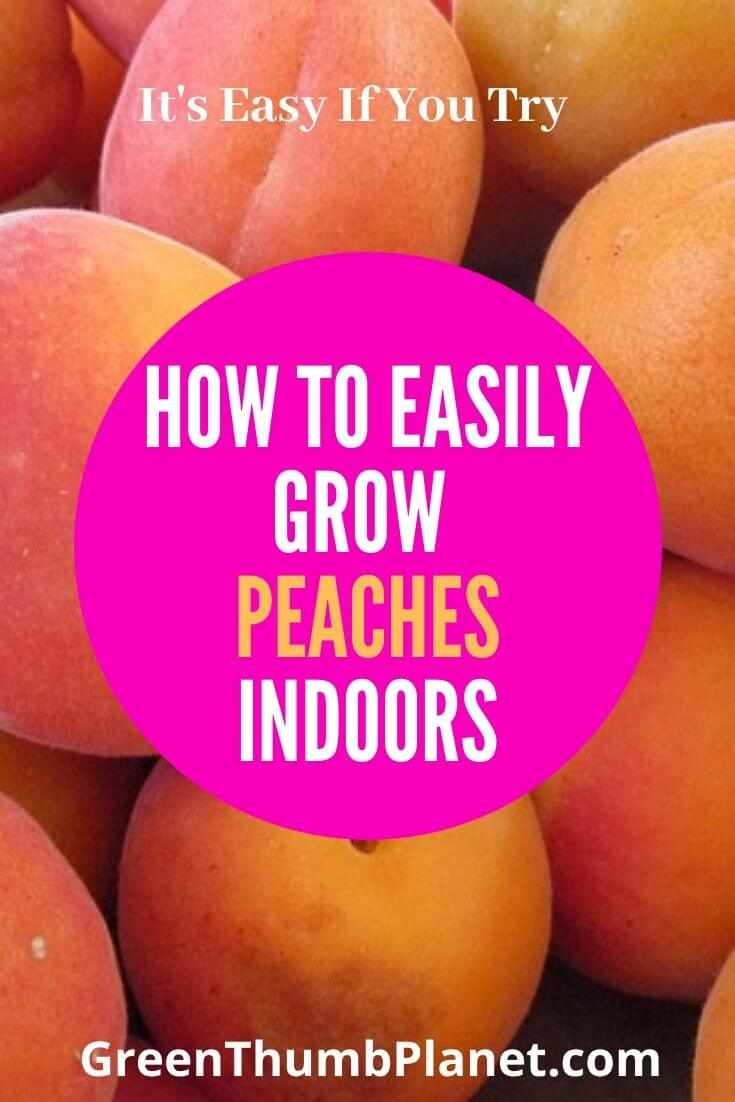 How To Grow Dwarf Apricots Indoors