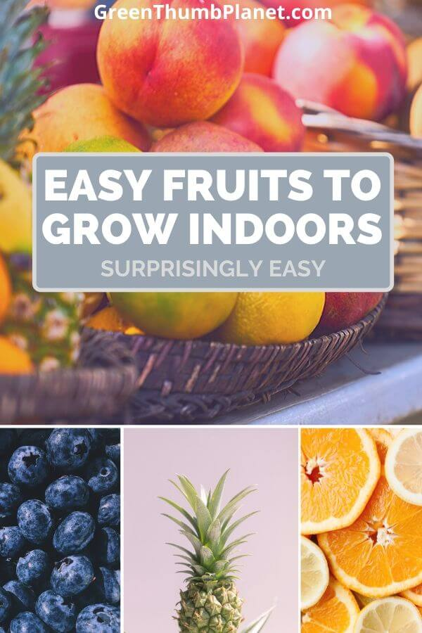 Easy Fruits To Grow Indoors