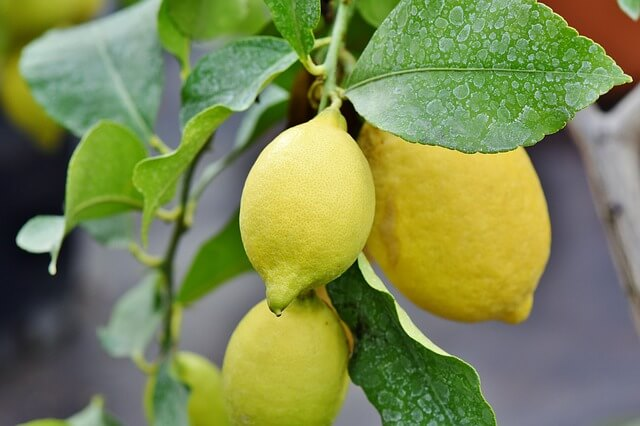 promote lemon tree sales