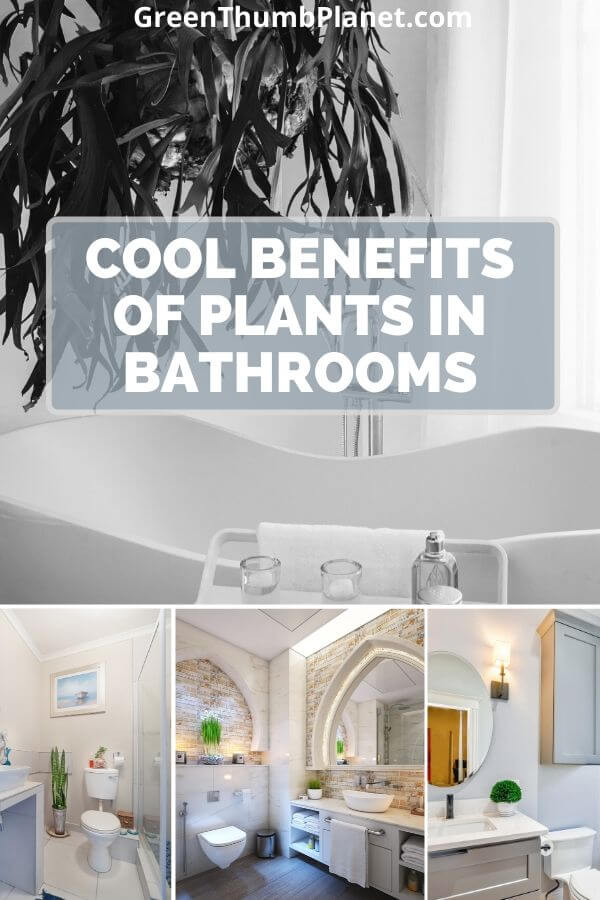 Cool Benefits Of Plants In Bathrooms