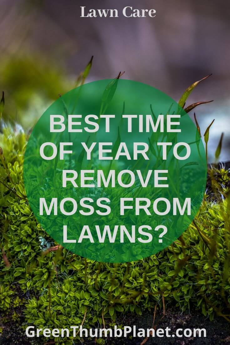 moss removal from lawns