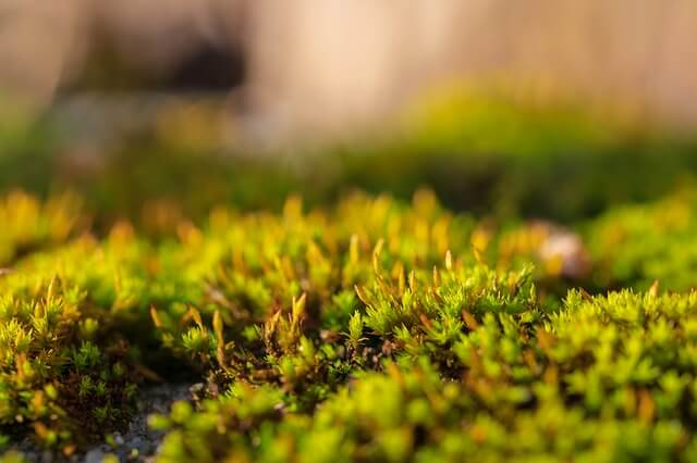 moss in your lawn indicates