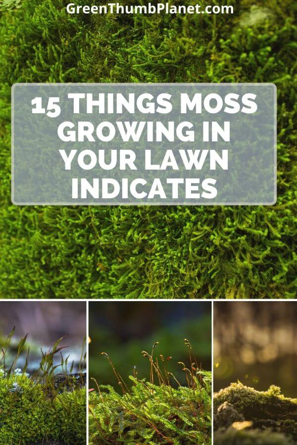 15 Things moss growing on your lawn indicates