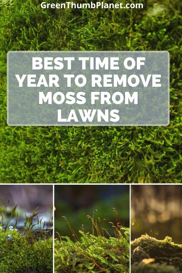Best time of year to remove moss from lawns?