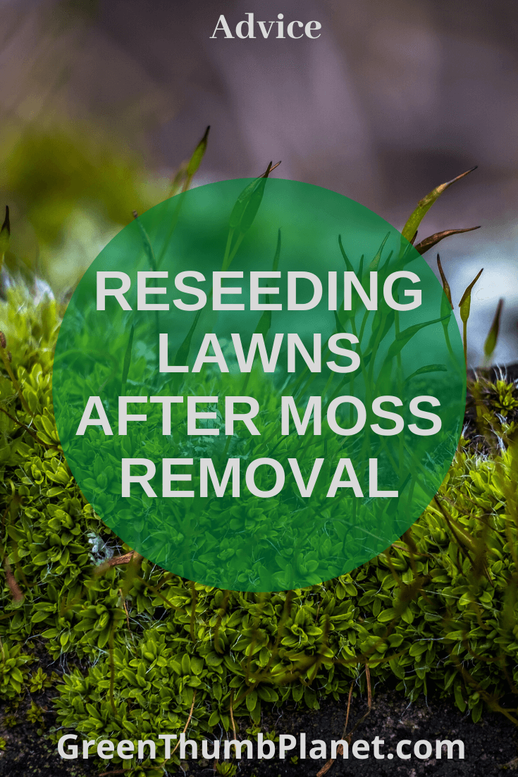Reseeding your lawn after removing moss