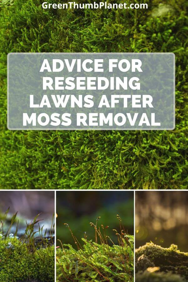 Advice For Reseeding Your Lawn After Moss Removal