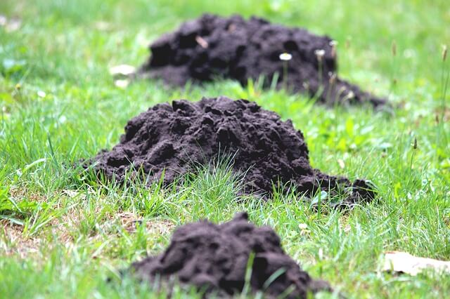 topsoil bundles for topdressing