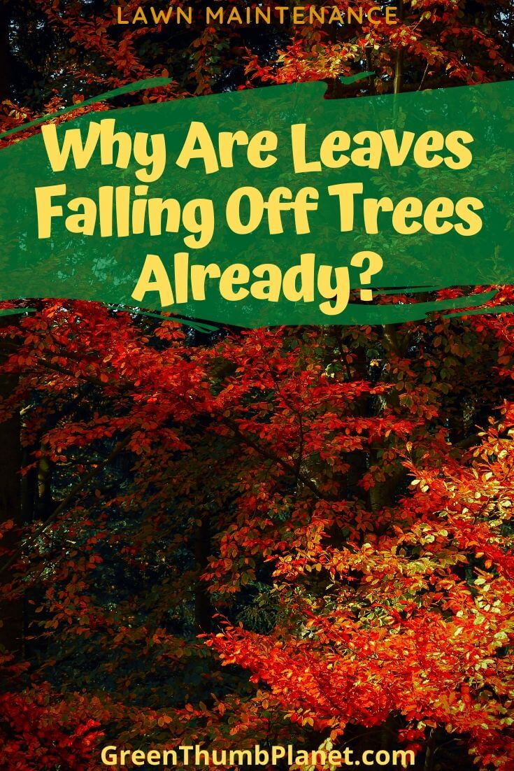 Why Are Leaves Falling Off Trees Already?