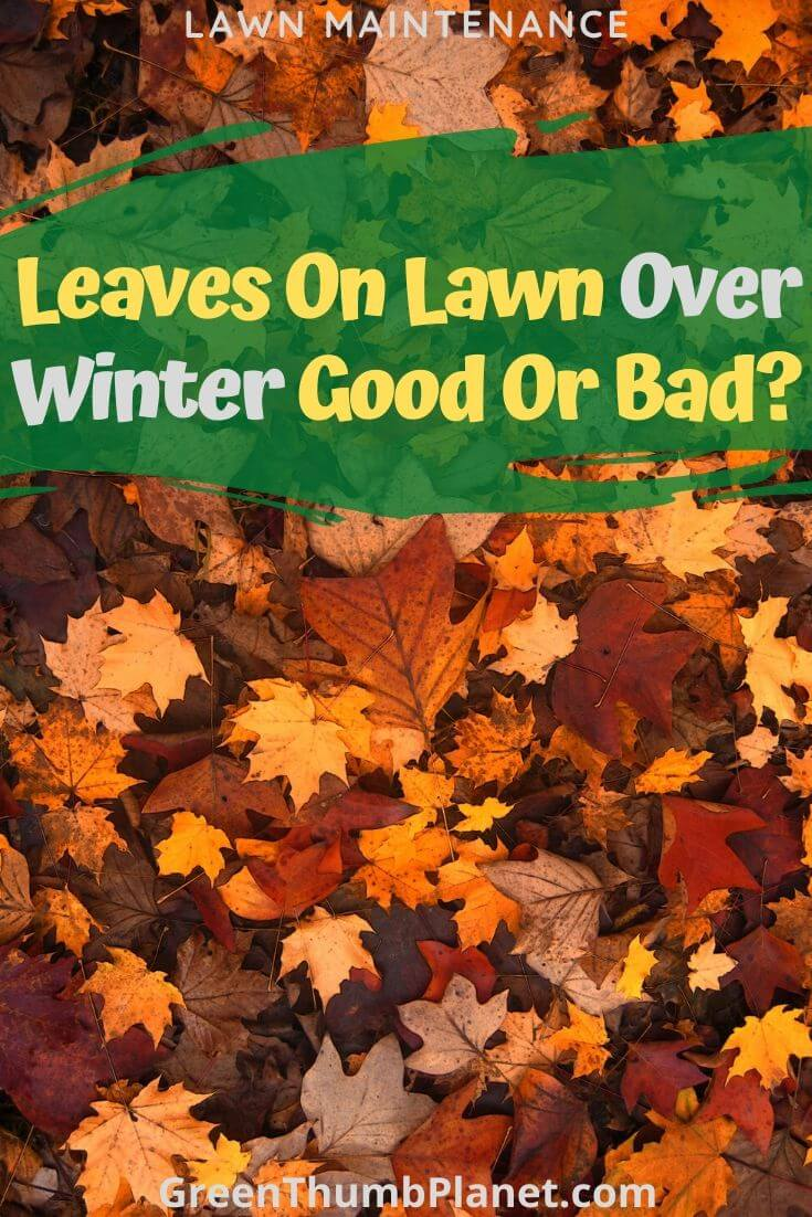 Are leaves On Lawns A Good Thing?