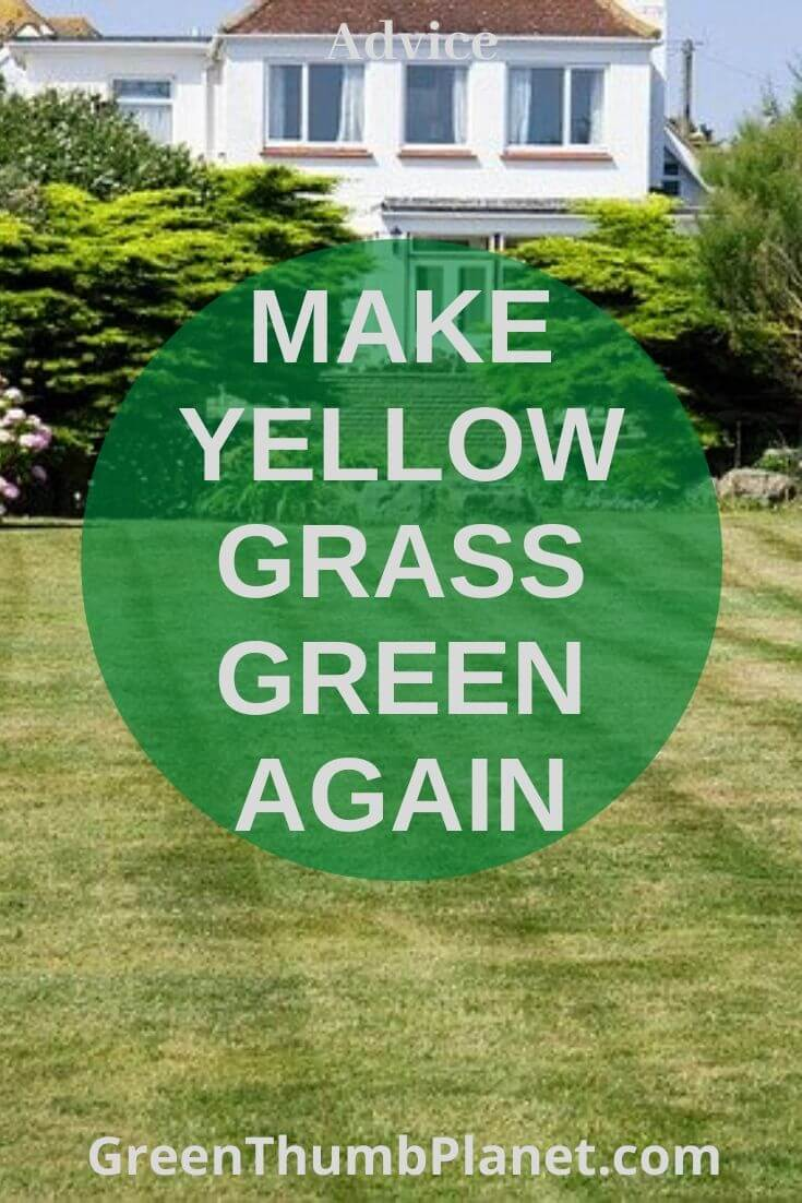 How to make yellow grass green again