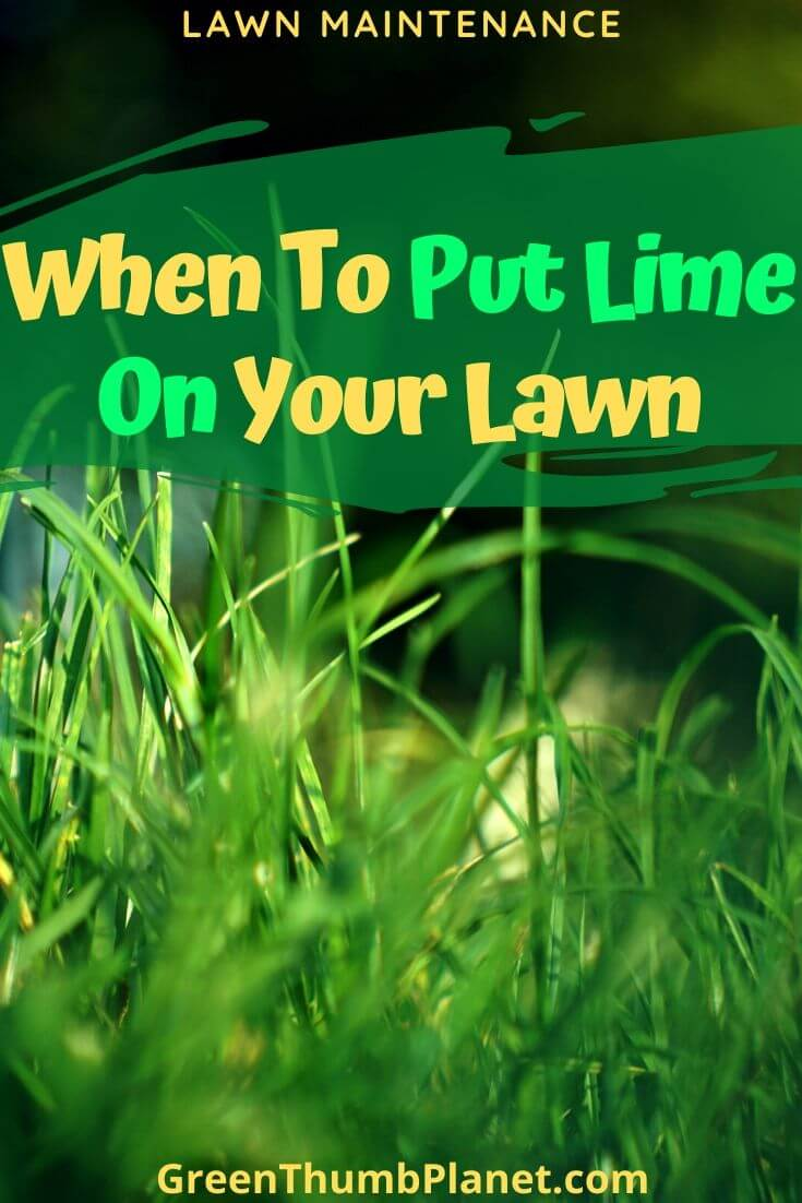 When Should You Lime Your Lawn?