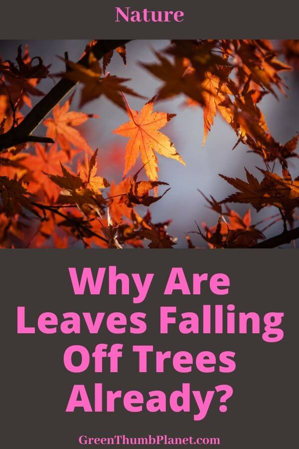 leaves falling off trees