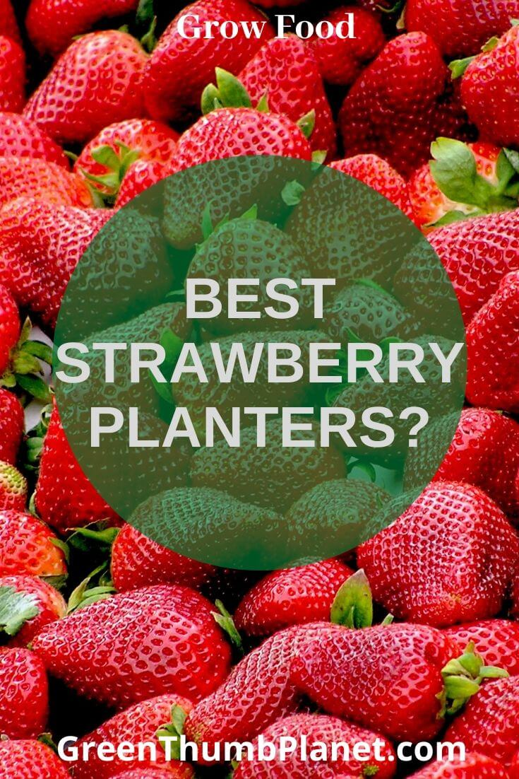 Best Indoor Strawberry Planter