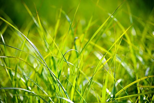 grass after you aerate