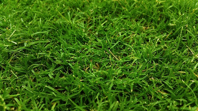 is centipedegrass good for lawns care