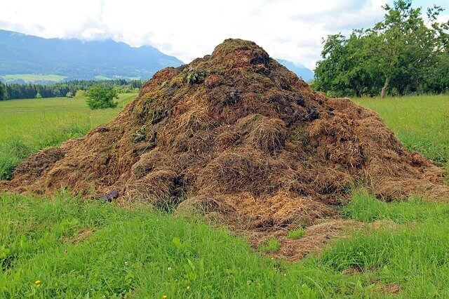 compost for natural lawn care