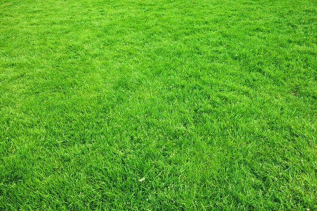 make your lawn thicker and greener