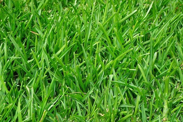 make your grass thicker and greener