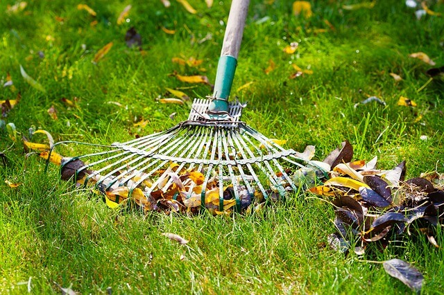 beginners tip rake moss from your lawn