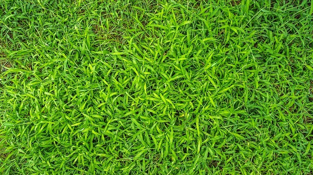 pros and cons of centipede grass