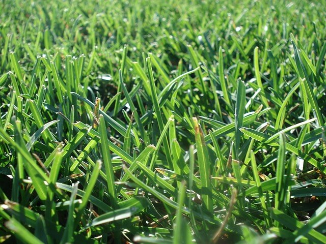 high temperature lawn mowing guide