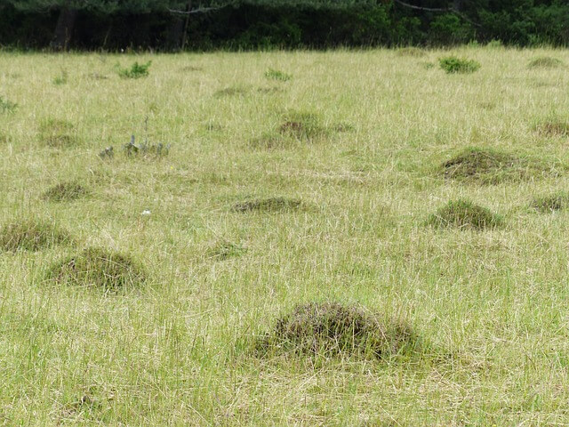 get rid of an ant hill naturally