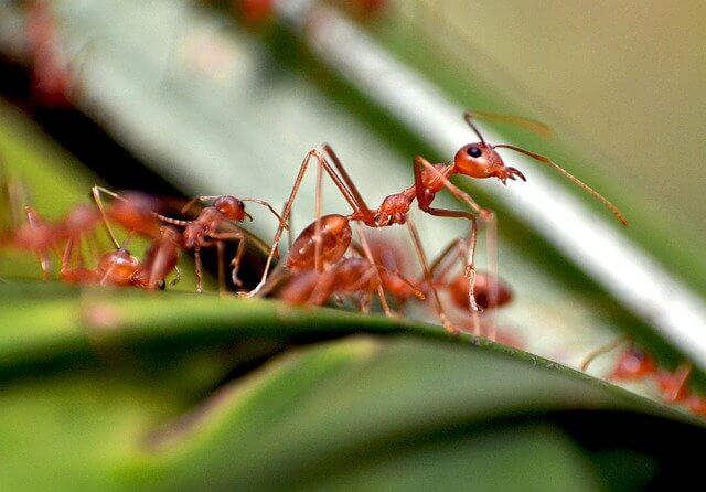 remove ants from your yard
