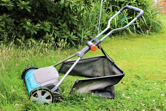 mow lawn how often