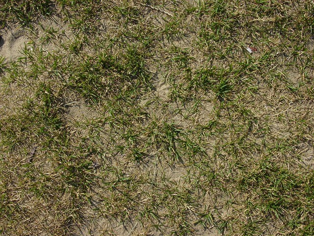 how to improve clay soil lawns